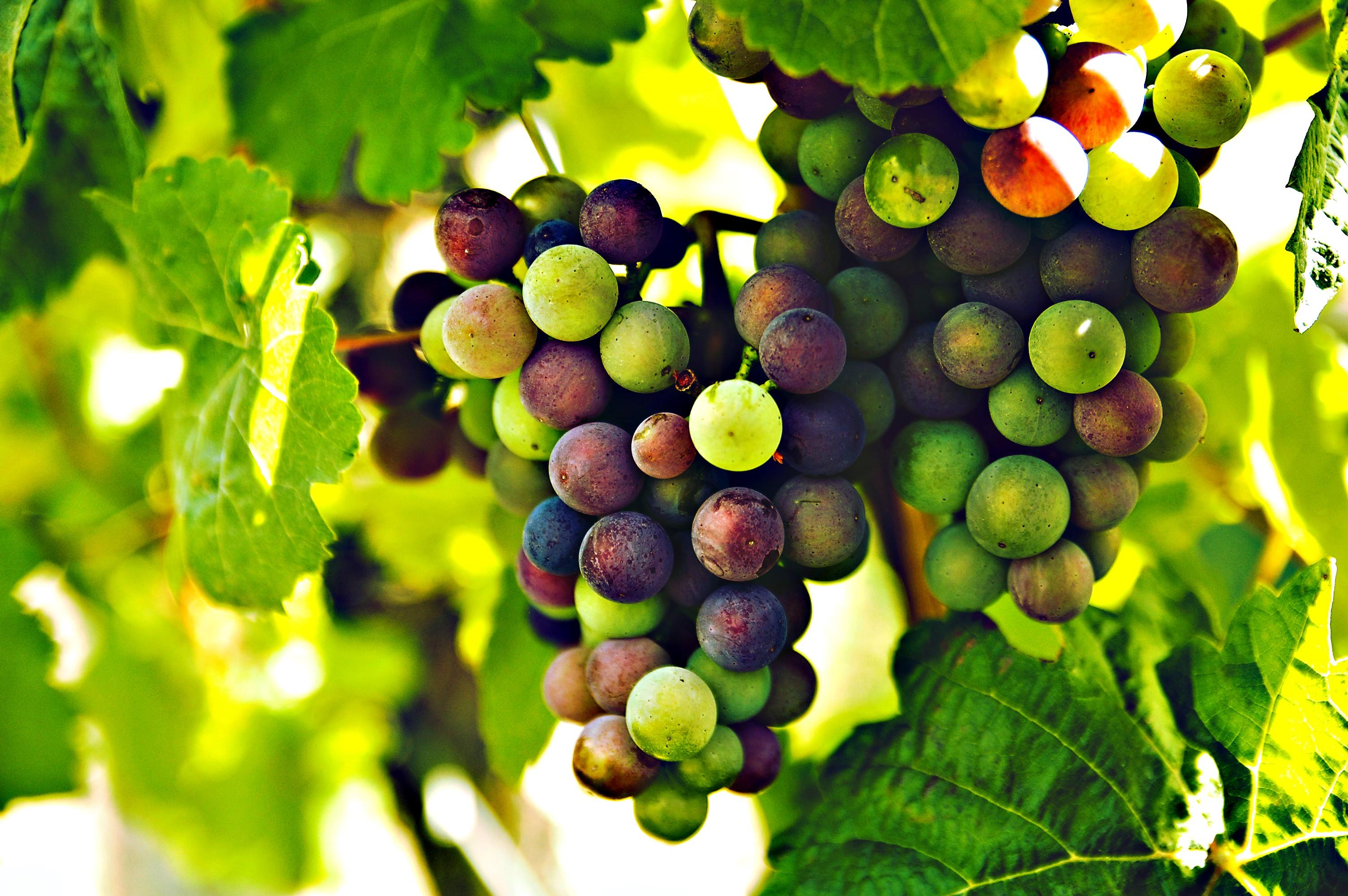 Tokajské víno Furmint levně v Bille