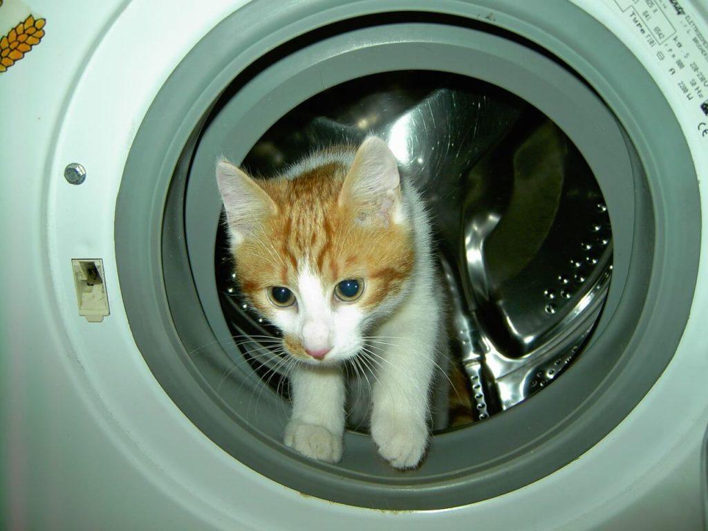 постирать кота